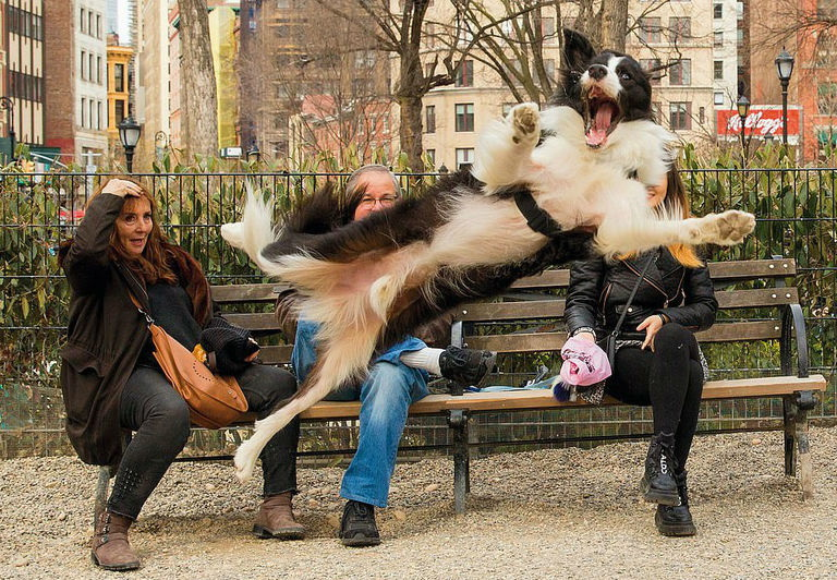 Photobomb canino
